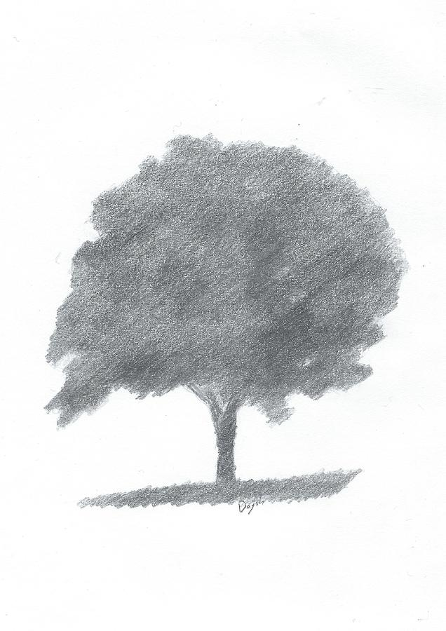 Beech Tree Drawing Number Two Painting by Alan Daysh