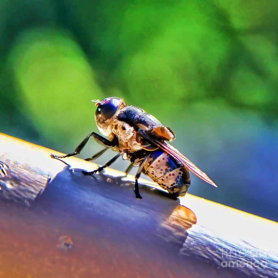 Beeing Nice By Diana Sainz Photograph