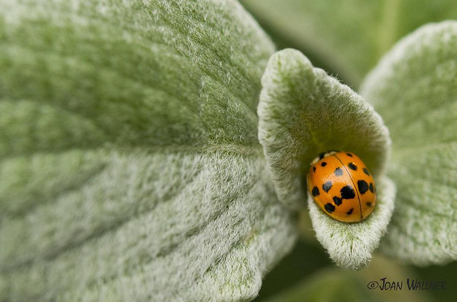 Fall Photograph - Beetle Pad by Joan Wallner