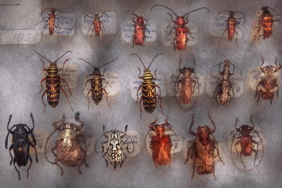 Bugs Photograph - Beetles - The Usual Suspects  by Mike Savad