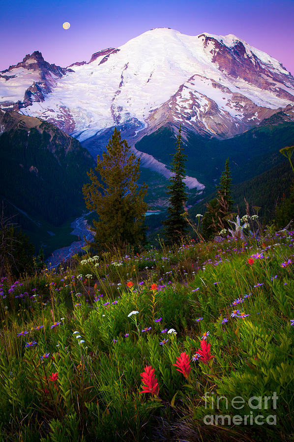 America Photograph - Before Dawn At Mount Rainier by Inge Johnsson