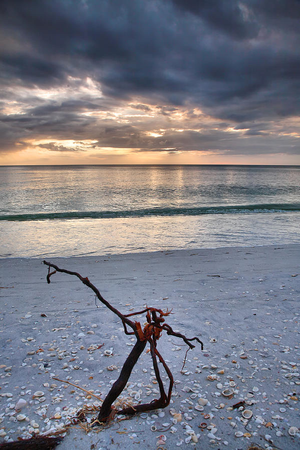 Snag Photograph - Before The Storm by Steven Ainsworth