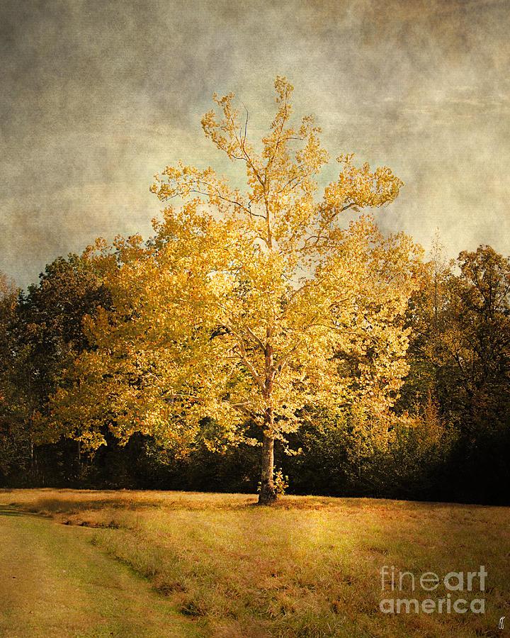 Autumn Photograph - Beginning Of Autumn by Jai Johnson