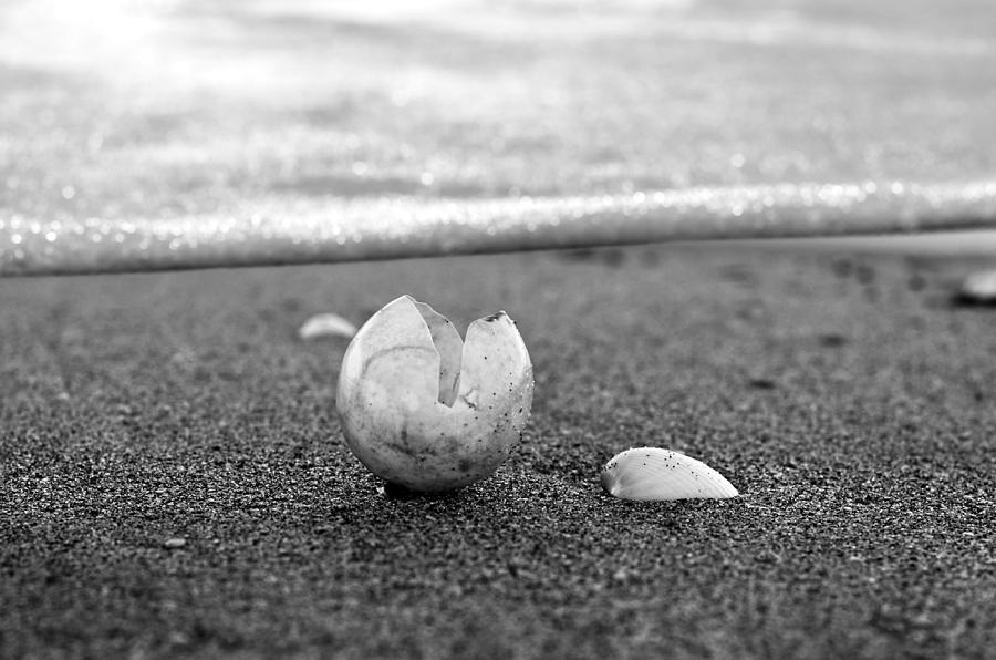 Seashell Scenes Photograph - Beginnings Black And White by Laura Fasulo
