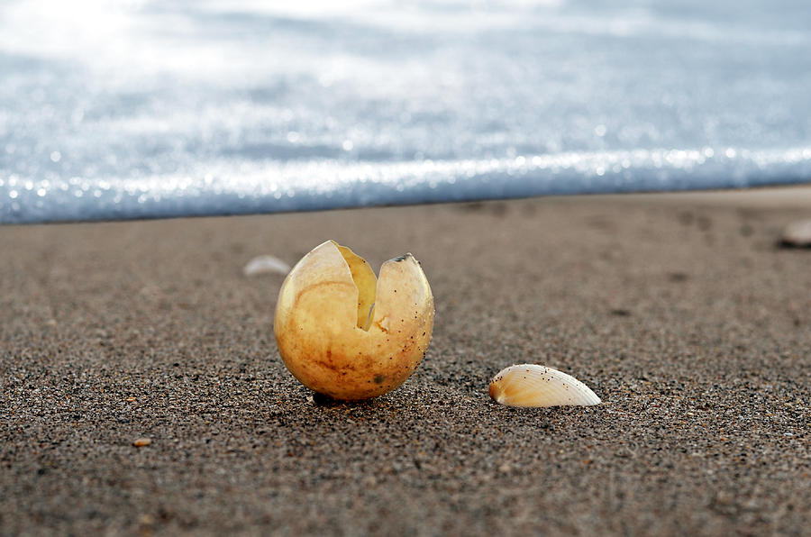 Seashell Scenes Photograph - Beginnings by Laura Fasulo
