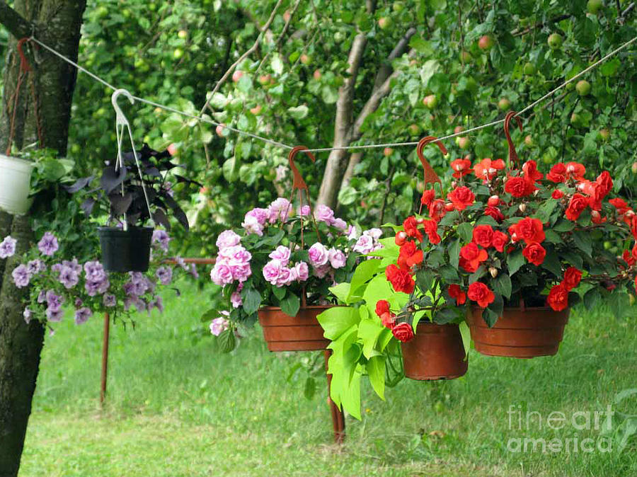 Flower Photograph - Begonias On Line by Ausra Huntington nee Paulauskaite
