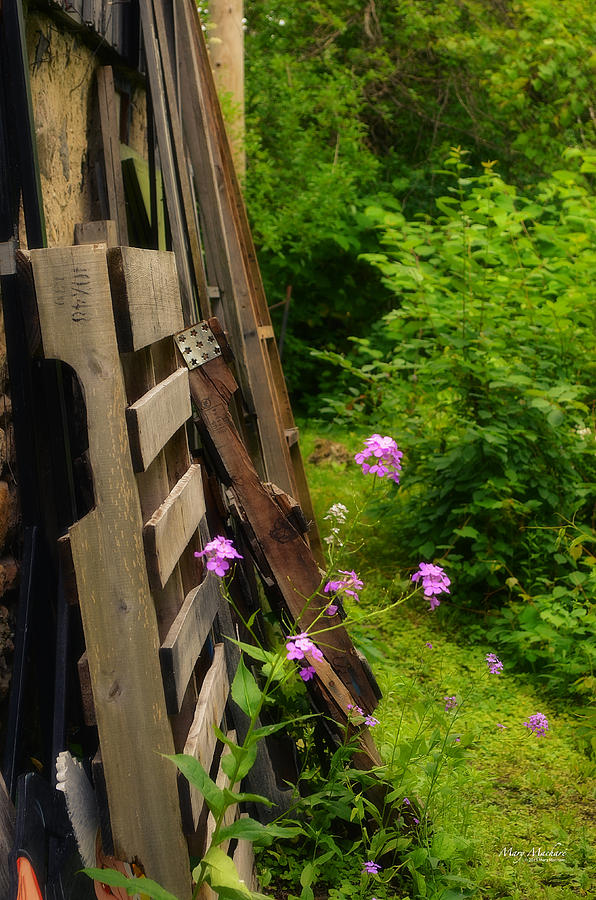 Old Wood Photograph - Behind The Old Shed by Mary Machare