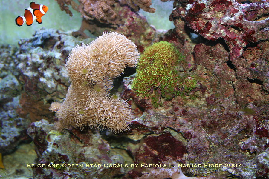 Beige Photograph - Beige And Green Star Corals by Fabiola L Nadjar Fiore