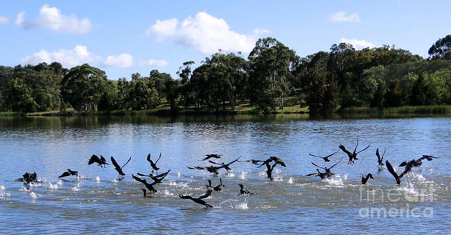 Lake Photograph - Belconnen Lake by Ben Yassa