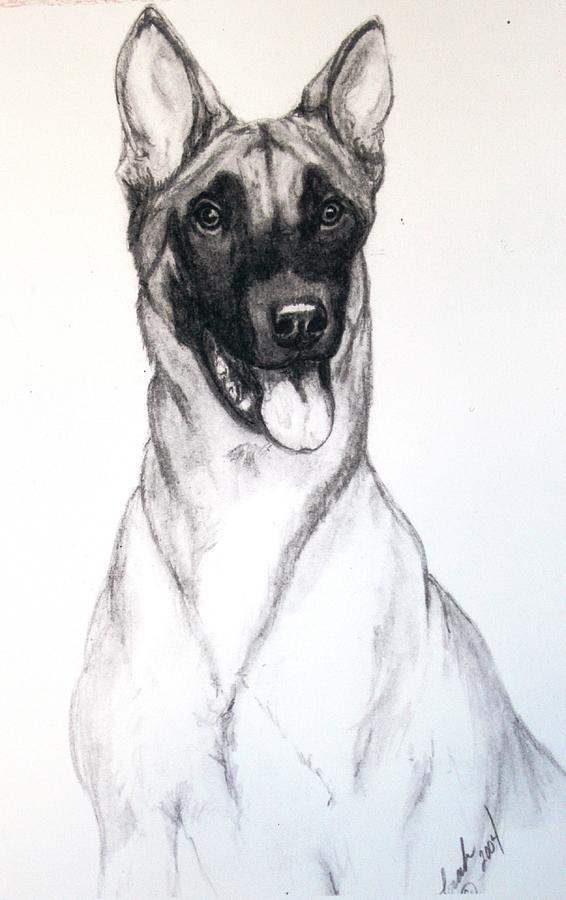 Belgian Malinois Drawing By Lorah Tout
