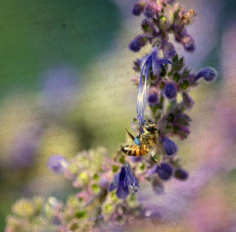 Bee Photograph - Believe by Fraida Gutovich