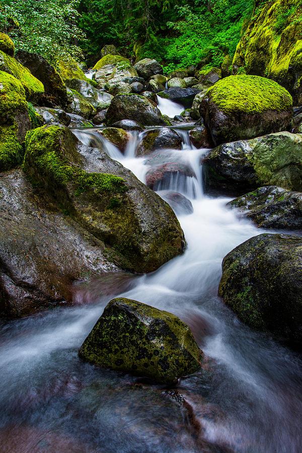 River Photograph - Below Rainier by Chad Dutson