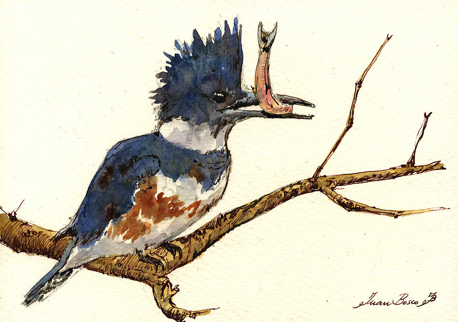Belted Painting - Belted Kingfisher Bird by Juan  Bosco