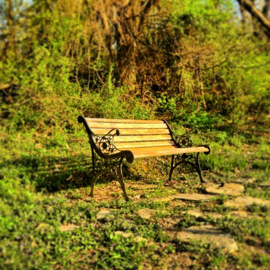 Bench Photograph - Bench At The Pond  by Andrew Martin
