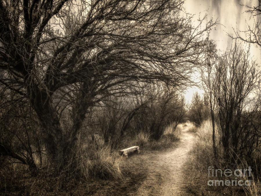 Bench Beneath The Mesquites - Toned Photograph