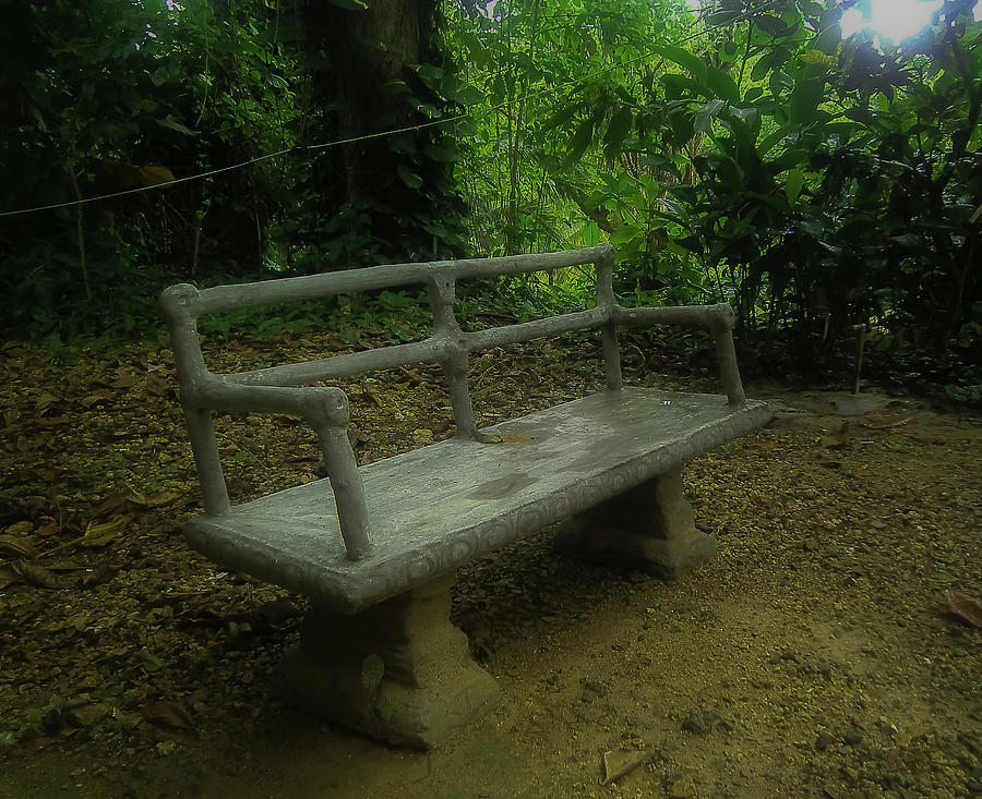 Tropical Photograph - Bench by Jennifer Burley