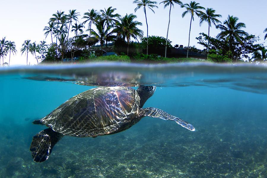 Sea Photograph - Beneath The Palms by Sean Davey
