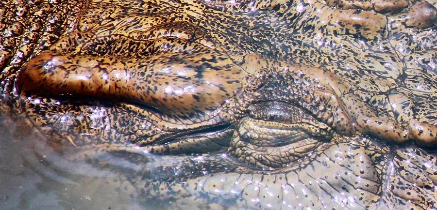 Croc Photograph - Beneath The Surface by Debbie Cundy