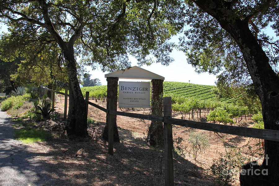 Vineyard Photograph - Benziger Winery In The Sonoma California Wine Country 5d24592 by Wingsdomain Art and Photography