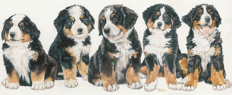 Bernese Mountain Mixed Media - Bernese Mountain Dog Puppies by Barbara Keith