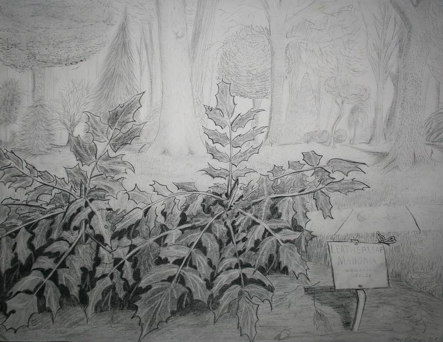 Bernheim Forest Plant Drawing