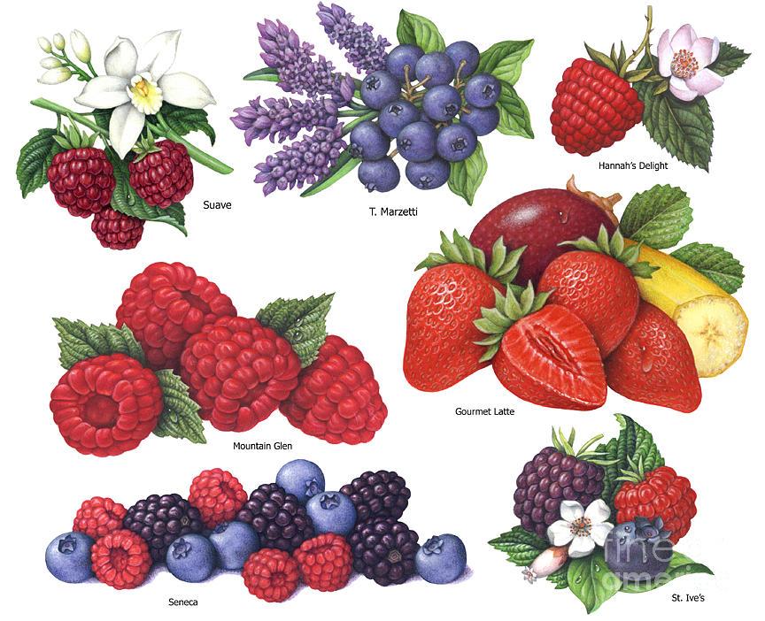 Berries Painting - Berries #3 by Douglas Schneider