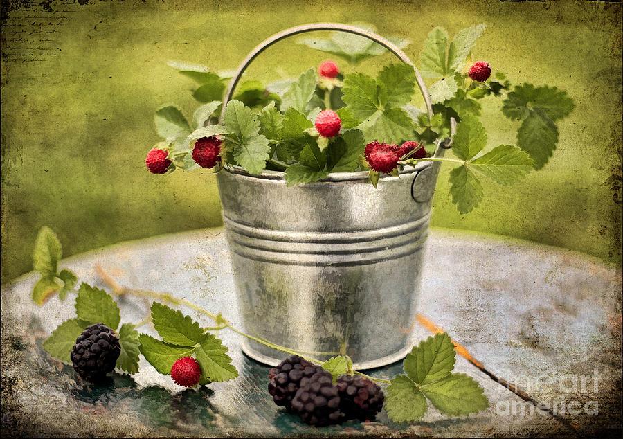Still Life Photograph - Berries by Darren Fisher