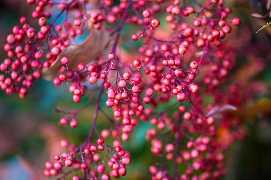 Berries Photograph - Berries by Mike Lee