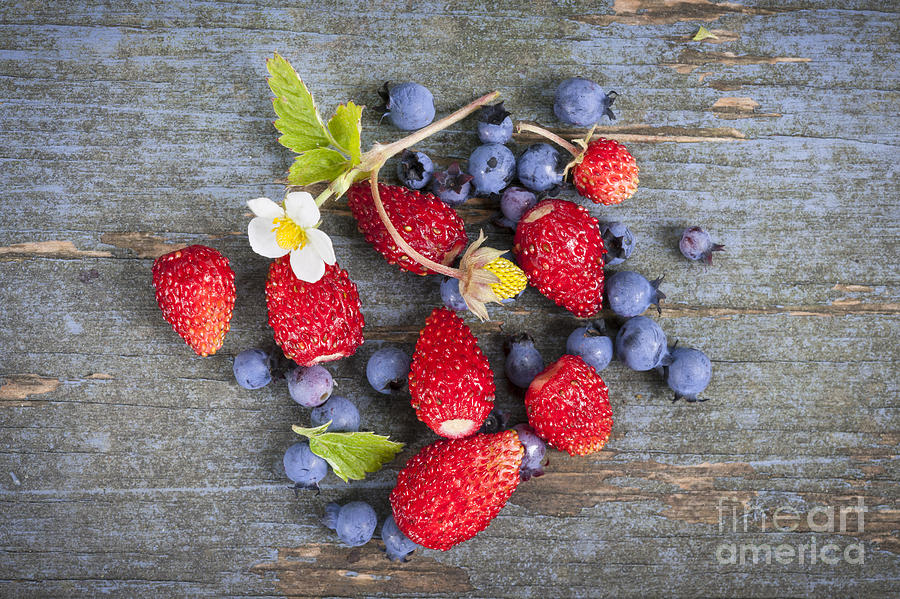 Berries Photograph - Berries On Rustic Wood  by Elena Elisseeva