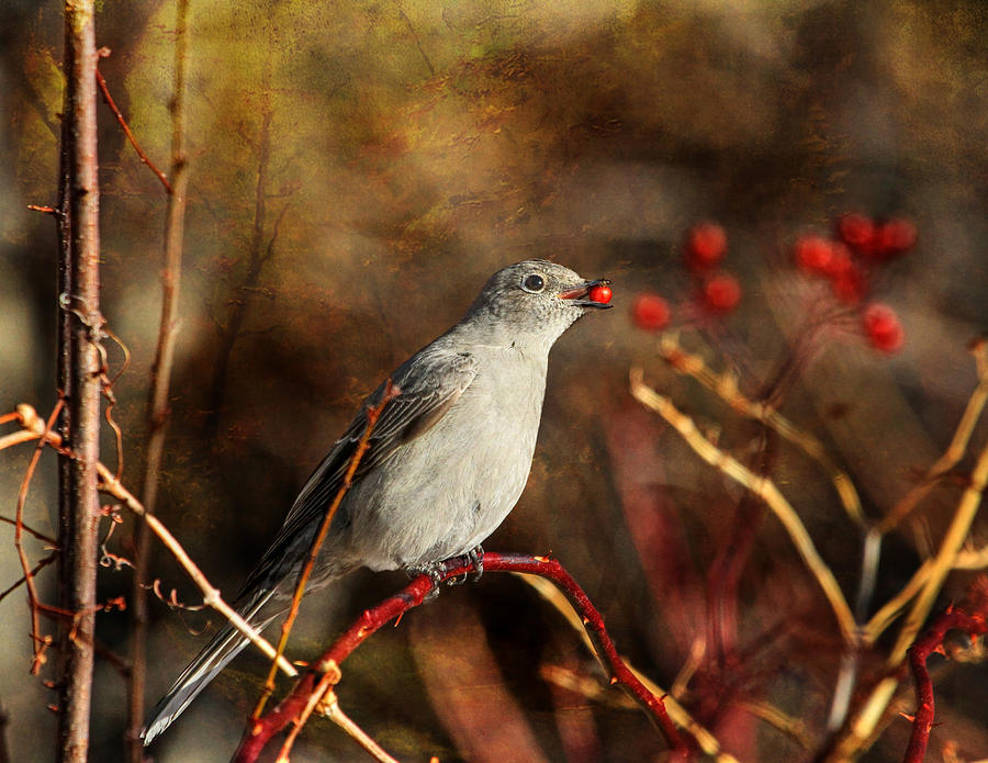 Bird Photograph - Berry Delighted by Donna Kennedy
