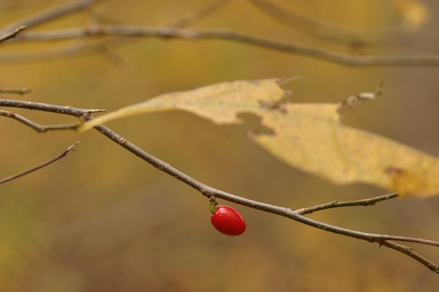 Berries Photograph - Berry by Mark Russell