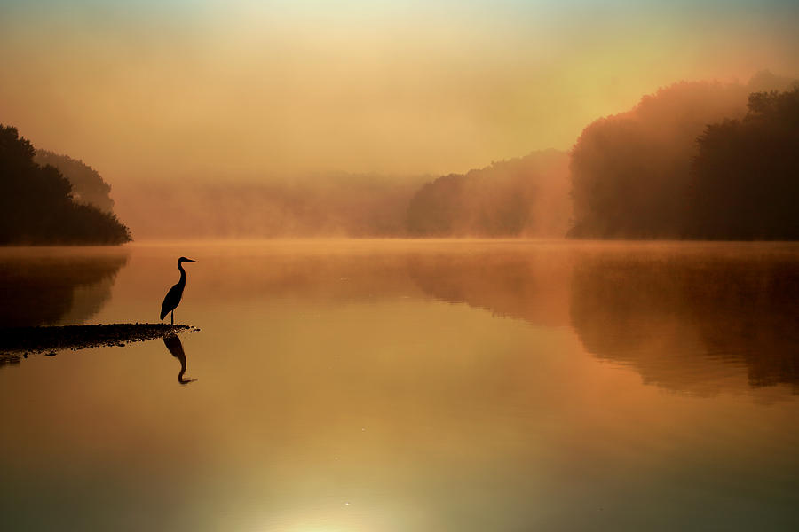 Blue Heron Photograph - Beside Still Waters by Rob Blair