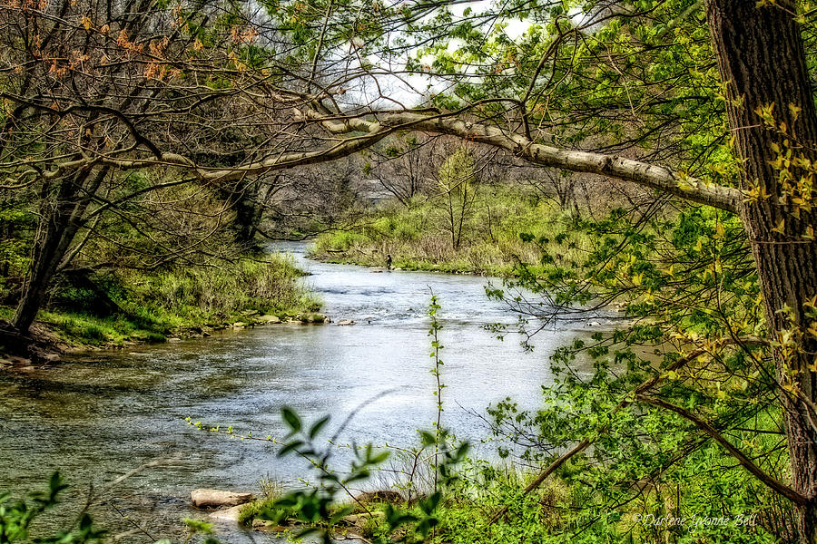 Stream Photograph - Beside The Stream by Darlene Bell