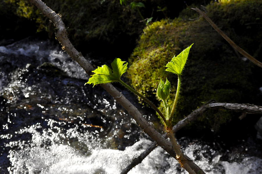Waterfall Photograph - Beside The Waterfall by Cathy Mahnke