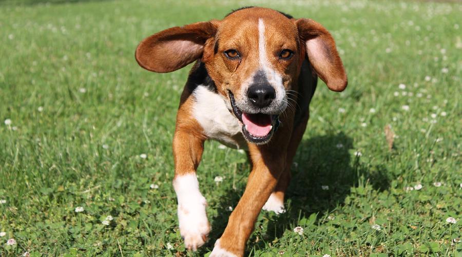 Dog Photograph - Best Buddy by Sarah E Kohara