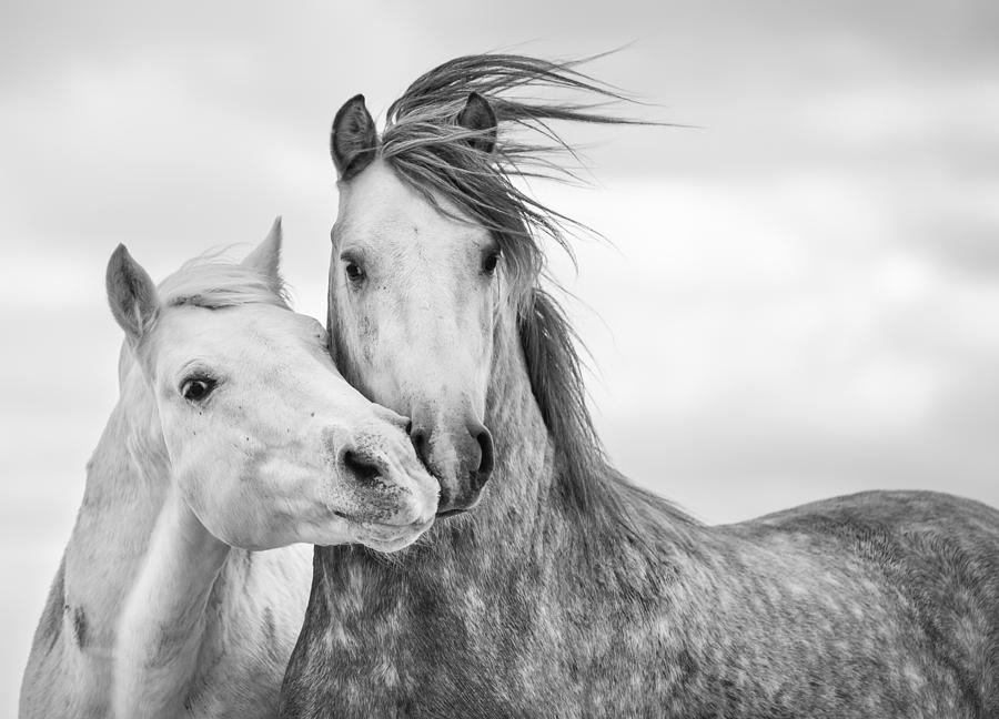 Black And White Photography Of Horse
