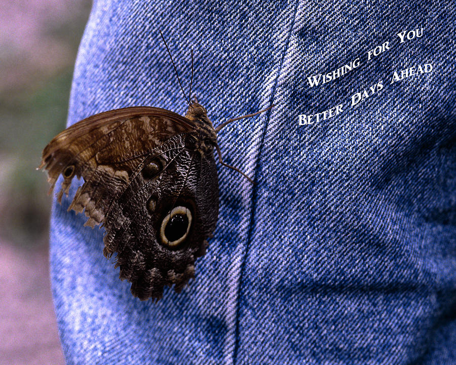 Tattered Wings Photograph - Better Days by Sally Weigand