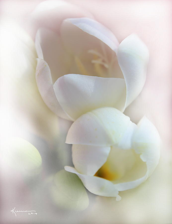 Flower Petals Photograph - Better Together by Kume Bryant