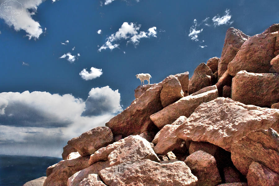 Denver Photograph - Between A Rock And A Hard Place by Tejas Prints