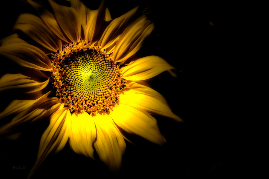 Sunflower Photograph - Between Here And There by Bob Orsillo