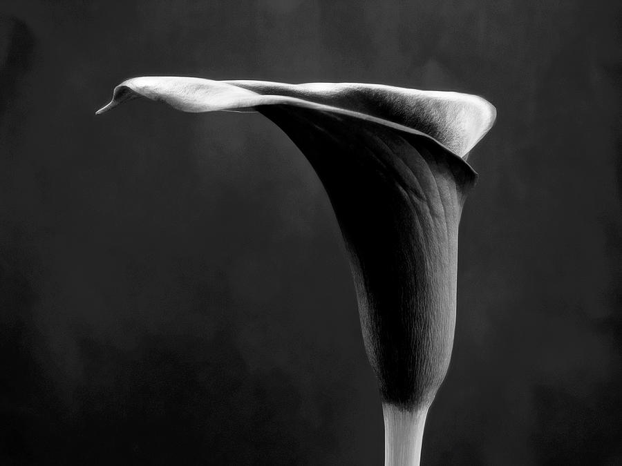 Art Black And White Flowers Photography Photograph by ...