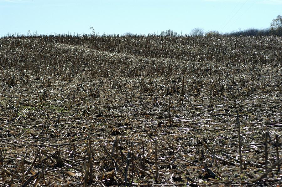 Corn Photograph - Between Sky And Field by Joseph Yarbrough