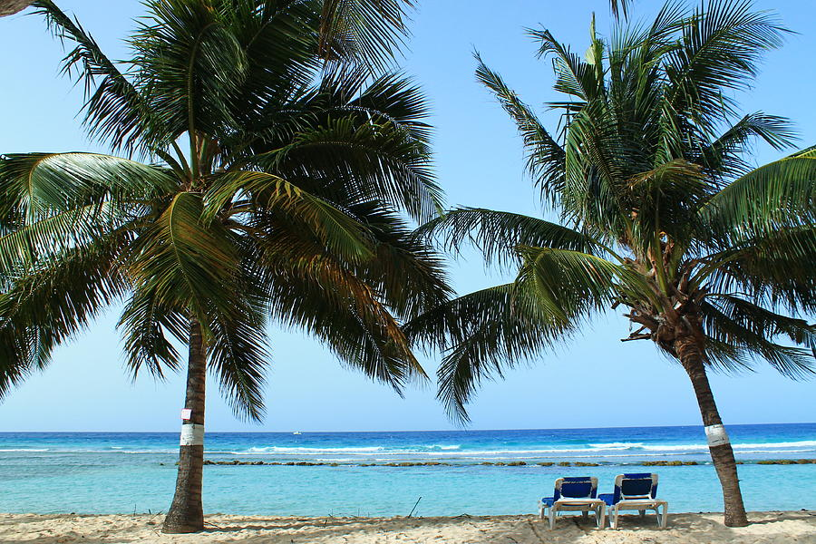Barbados Photograph - Between The Palms by Catie Canetti