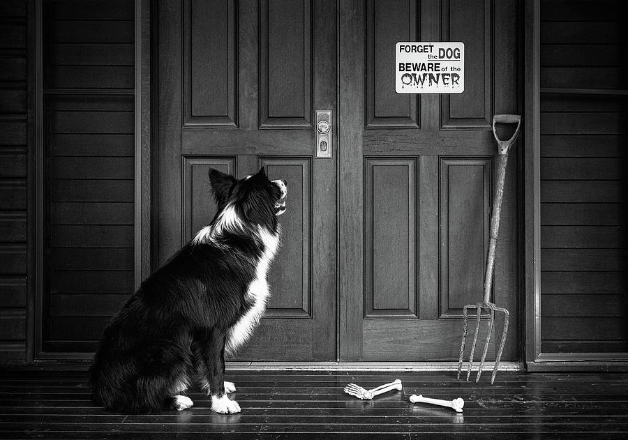 Dog Photograph - Beware Of The Owner by Jacqueline Hammer
