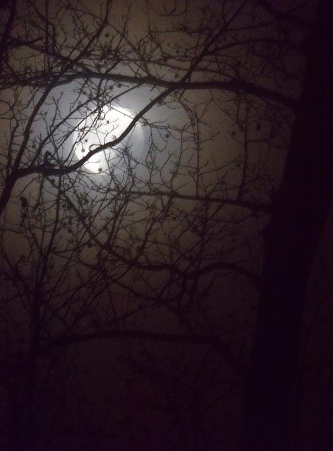 Rougarou Moon Photograph - Beware The Rougarou Moon by John Glass