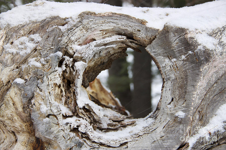 Snow Covered Photograph - Beyond the Log by Mike Mooney