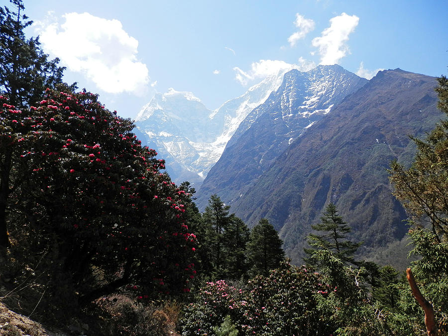 Rhododendrons Photograph - Beyond The Rhododendrons 1 by Pema Hou