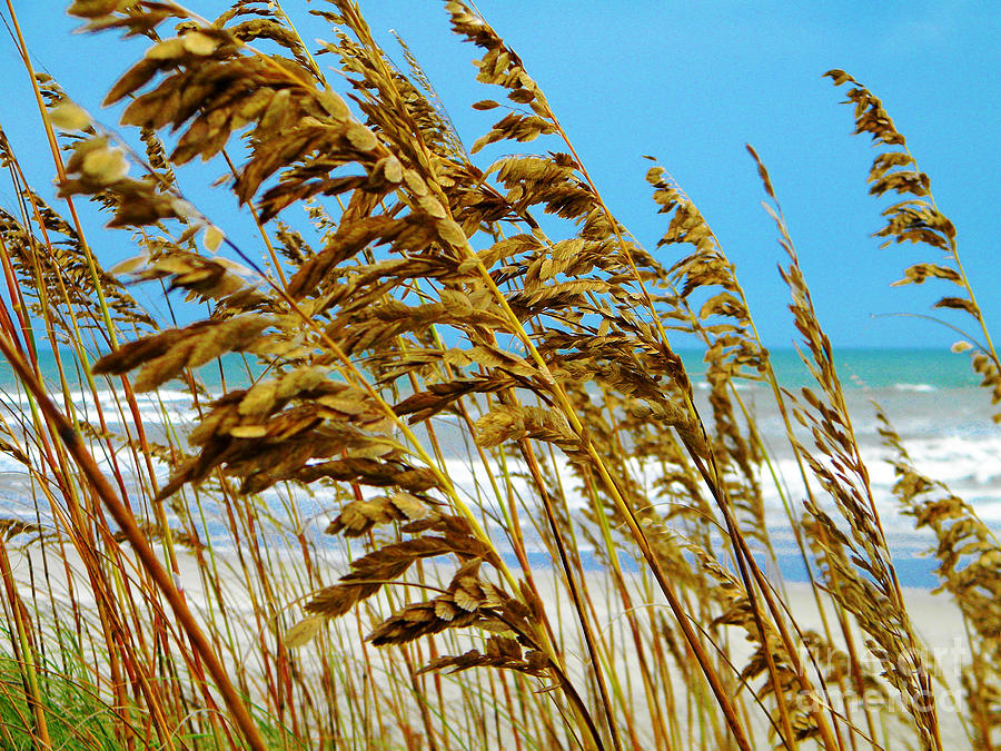 Beyond The Sea Oats Lies Eternity Photograph by Lorraine Heath