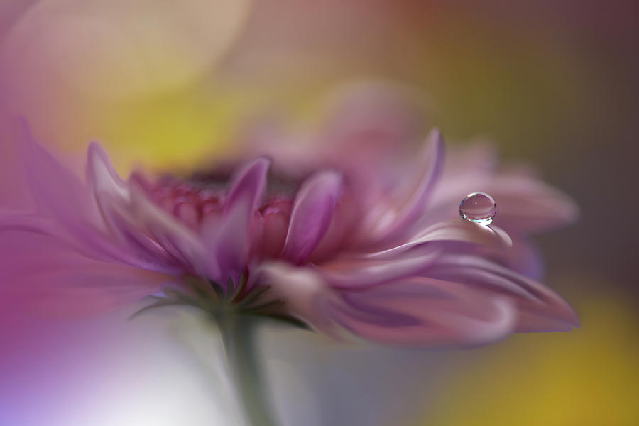 Flower Photograph - Beyond Words... by Juliana Nan