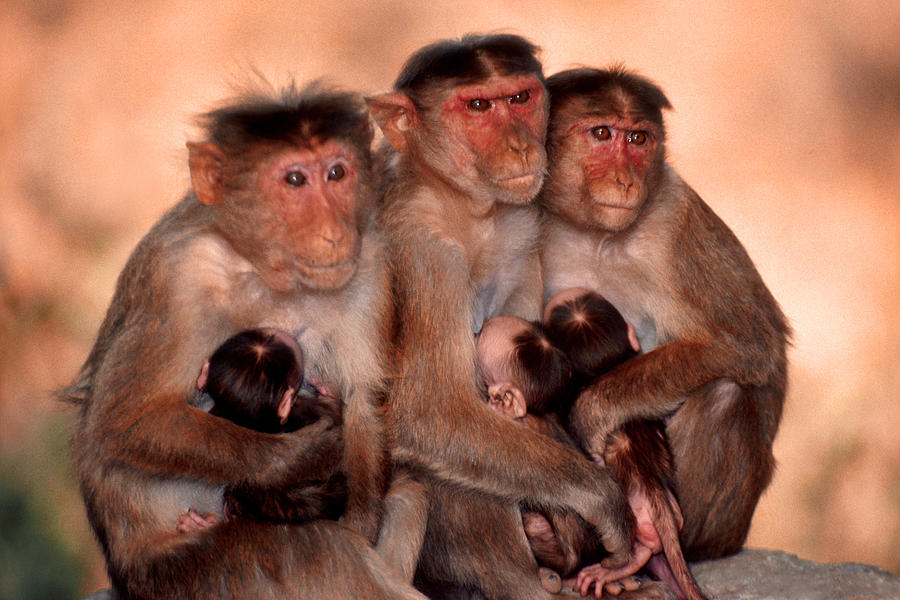 Monkey Moments by Joe Connors